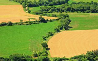 Fields, crops, trees and hedgerows
