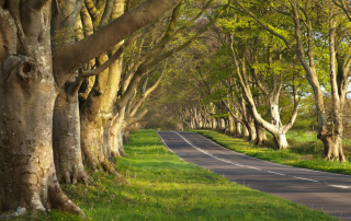 Tree-lined rural road